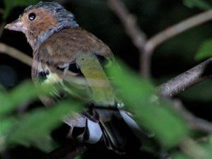 Uccelino su un albero del parco