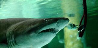 acquario-cattolica-notte-squali