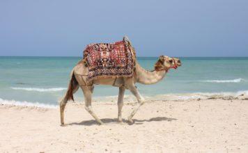Tunisia: il fascino dell'Africa a due passi dall'Italia