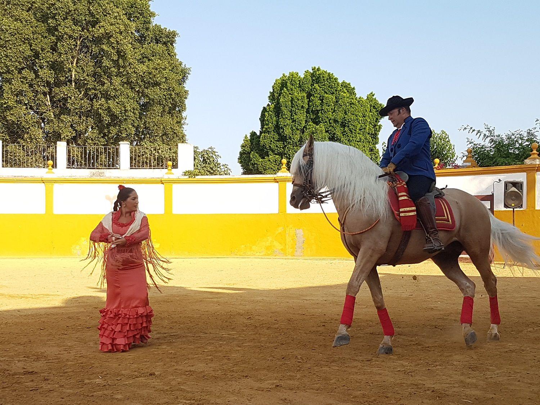 Danza cavallo andaluso e ballerina