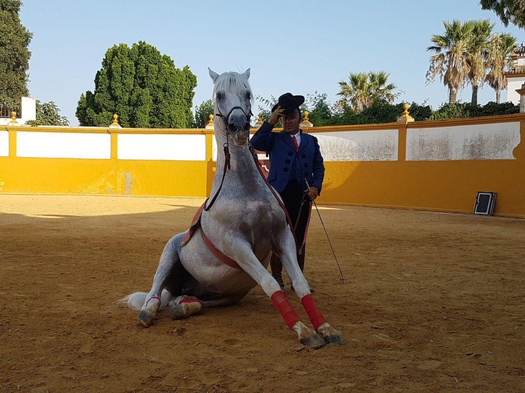 danza cavallo andaluso e ballerina_4