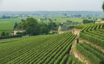 tour fra i vigneti di Bordeaux, dove degustare e comprare vino