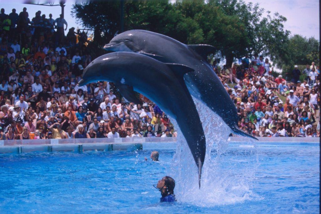 portogallo-in-famiglia-cibo-sabbia-faraglioni-bici-surf-cetacei