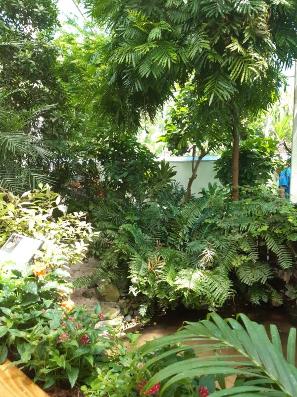 Casa delle Farfalle, Key West Butterfly and Nature Conservatory