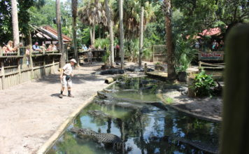 Alligator_Farm_3_St.Augustine