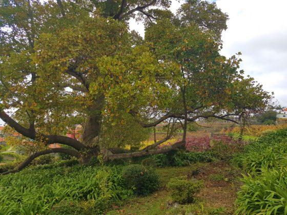Quinta das Vinhas - giardino