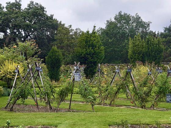 Chateau de la Bourdaisière_ Nell'orto si coltivano 700 tipi di pomodori non ibridati