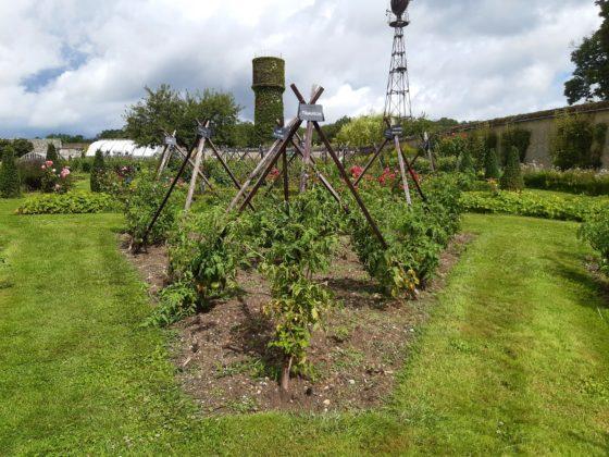 Chateau de la Bourdaisière_ panoramica dei tutori di pomodori