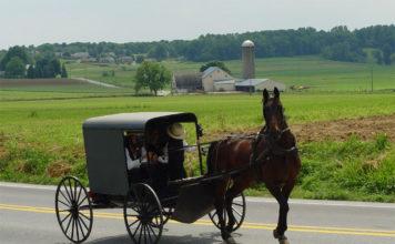 Viaggio in calesse tra gli Amish